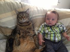 A cat the size of a baby - um LMAers, does this not look EXACTLY like Nat & Cheryl's little guy?!?