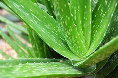 Уходи, кактус с монитора. Если вы хотите дышать чистым воздухом и хорошо высыпаться и дома и на работе, вот правильный список полезных растений.