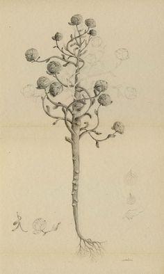 joanna concejo: herbier