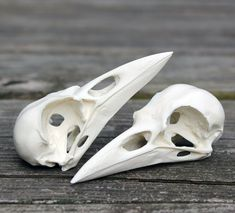 resin crow skull replica