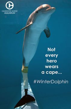 Winter is inspiring and amazing and so are the people who work at the Clear Water Aquarium/Hospital where she lives- rescue, rehab, release. We had a wonderful visit there today :)) Orcas, Dolphin Tale 2, Dolphin Quotes, Bottlenose Dolphin, Humpback Whale, Clearwater Marine Aquarium, Water Animals, Wale, Marine Biology