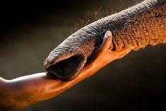 16 photos puissantes et tragiques, pour mettre un terme au trafic illégal d'animaux sauvages