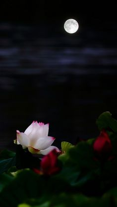 Moon Beautiful Fantasy Art, Beautiful Moon, Beautiful Roses, Beautiful Places, Moon Images, Moon Pictures, Nature Pictures, Night Flowers, Flowers Nature