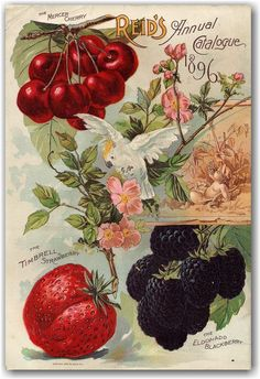 Vintage seed company catalog illustrations