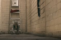How koalas run :-))