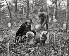 "Washington, D.C., circa 1926. ""Dog cemetery."" National Photo Company Collection glass negative."