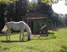 Ziggy near the chicken house. Natural Horsemanship, Horses, Chicken, Nature, Animals, Animales, Animaux, Horse, The Great Outdoors