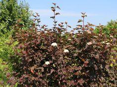 Fruit, Plants, Blog, Dark Red, Nursing Care, Blogging, Plant, Planets