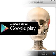 The Anatomy Game  Anatomicus is available on Google Play. #anatomygame #game #anatomy