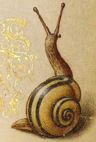 Snail trail..