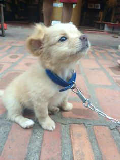 "awwww-cute: ""A friend was travelling through Laos and Vietnam and met this little fella."""