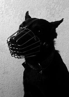 ♛ εɱρσωε૨ σµ૨ εɱρเ૨ε ♛ Ai No Kusabi, Cerberus, Arte Horror, Werewolf, Pets, Supernatural, Scary, Creatures, Black And White