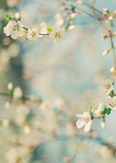 bonjour le printemps