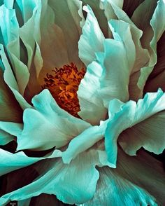 turquoise ~ i think this is a georgia o'keefe painting. Georgia Okeefe, Art Floral, White Peonies, Peony Flower, Macro Flower, Flower Oil, Love Art, Beautiful Flowers, Simply Beautiful