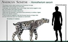 """A lesser know breed of the """"Sabertooth Tiger,"""" the American Scimitar (Homotherium Serum) American Lion, Dinosaur Images, Walk The Earth, Prehistoric Creatures, Prehistoric Wildlife, Extinct Animals, Science And Nature, Long Legs, Big Cats"""