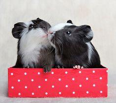 the kiss*