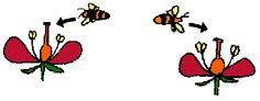 Ruokatieto, hyönteispölytys Elementary Science, Science And Nature, Geography, Science And Nature Books