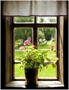 Free Indoor Gardening Guides - Grow beautiful plants and flowers indoors with tips from these free online guides.