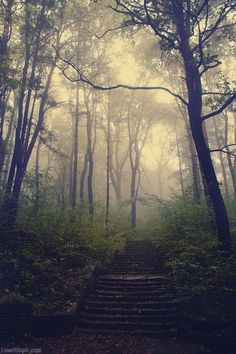Beautiful foggy paths in the #woods always lead to #adventure.