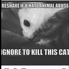 Omg that is really terrible what people are doing to animals. You should take care of animals not abuse them cause animals they have feelings too Save Animals, Animals And Pets, Stop Animal Cruelty, Animal Testing, Sad Stories, Faith In Humanity, Animal Rights, Cute Kittens, In This World