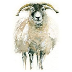 Watercolor Sheep, Sheep Print, Sheep Art, Farm Animal Art,Painting of... ($9) ❤ liked on Polyvore featuring home, home decor, wall art, watercolor wall art, farm animal paintings, water color painting, watercolour paintings and sheep painting