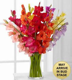 Look to the Rainbow Gladiolus Bouquet - 10 Stems with Pink Vase Included Gladiolus Centerpiece, Gladiolus Arrangements, Beautiful Flower Arrangements, Floral Arrangements, Tall Centerpiece, Gladioli, Irises, Gladiolus Wedding, Gladiolus Flower