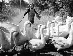 La petite fille aux oies | Saint Sauvant |¤ Robert Doisneau | 11 mai 2015 | Atelier Robert Doisneau | Site officiel
