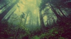 Shop Misty Forest Poster created by FotoFactory. Personalize it with photos & text or purchase as is!