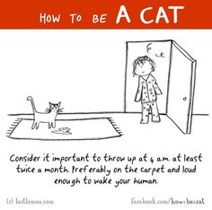 How To Be A Cat ! - We Love Cats and Kittens