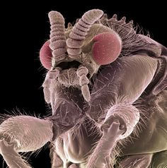 Insects magnified one million times