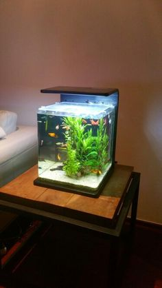 Small aquarium 60l