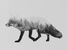 Poster | THE FOX (BLACK & WHITE V… von Andreas Lie