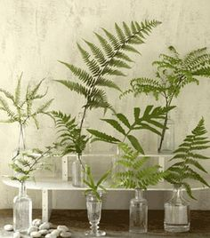 Mixed height displays of classic Northwest fern selections