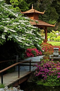 Japanese Gardens, Powerscourt, Enniskerry, Wicklow, Ireland. (White flowering tree)