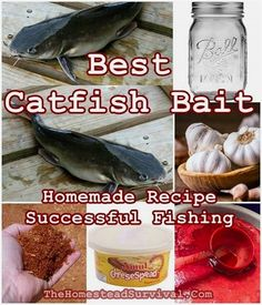 Best Catfish Bait Homemade Recipe for Successful Fishing that has been handed down from generation to generation in the homesteading community. The