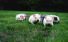 Oh look...little cuties