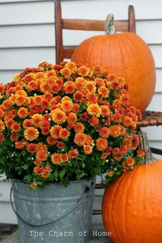 Pumpkins and mums.