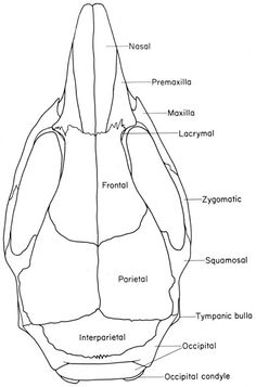 The Anatomy of the Laboratory Mouse Anatomy, Artistic Anatomy