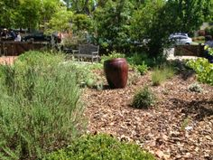 Lessons from the California native plant garden tour.  Use leaves for mulch is one (pictured here).