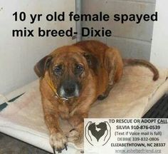 Dixie: why do people adopt/buy dogs if they're going to dump them when they get old?