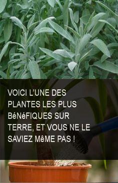 Voici l'une des plantes les plus bénéfiques sur terre, et vous ne le saviez même pas ! #Plante #Plantes #Vie #Benefiques #Terre Sante Plus, Tips Online, Garden Care, Natural Medicine, Permaculture, Horticulture, Voici, Detox, Healing