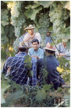 california farm workers union | ... the United Farm Workers Union Delano, CA, US 1968 Photo Arthur Schatz