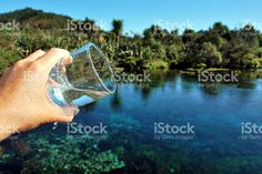 Drinking Water from Te Waikoropupu Springs royalty-free stock photo Agriculture Photos, Water Sources, Spring Photos, Open Up, Image Now, Drinking Water, Royalty Free Stock Photos, Pure Products, Future