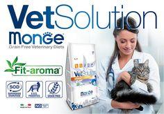 VetSolution - Cat