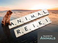 Animal reiki is something that can help our furry friends with physical, mental and emotional issues.
