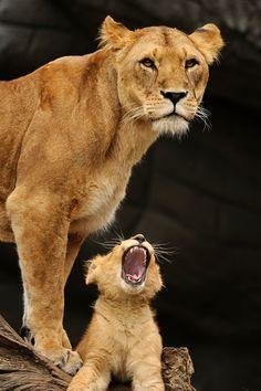 .Hey mom!