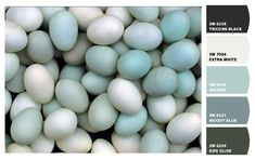 Robin's Egg Blue inspired color / Paint colors from Sherwin-Williams / SW Watery, SW Tricorn Black, SW Extra White, SW Moody Blue, SW Ripe Olive