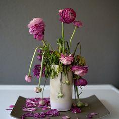 last move #faded #leica #flowers #tortuscopenhagen #leicacraft #molesbreath #farrowandball