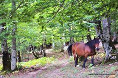 Al lado de nuestra #casarural tenemos a Dynatur con muchísimas #actividades para esta #primavera en la naturaleza. www.casaruraldenavarra.net