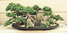 Bonsai forest.